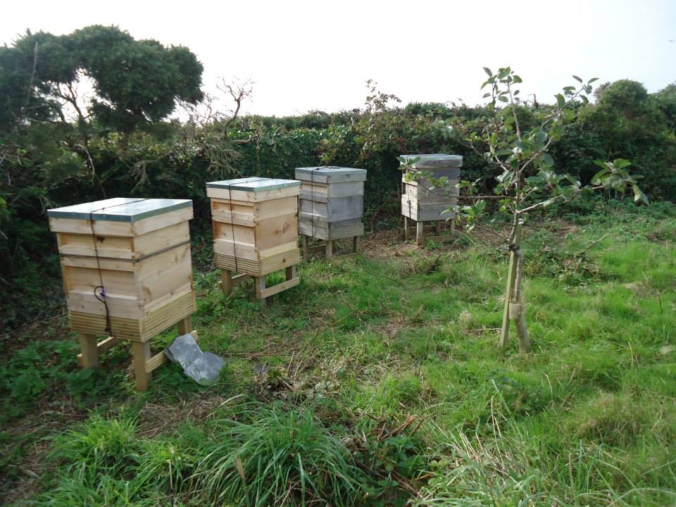 Bee hives in the corner of home field