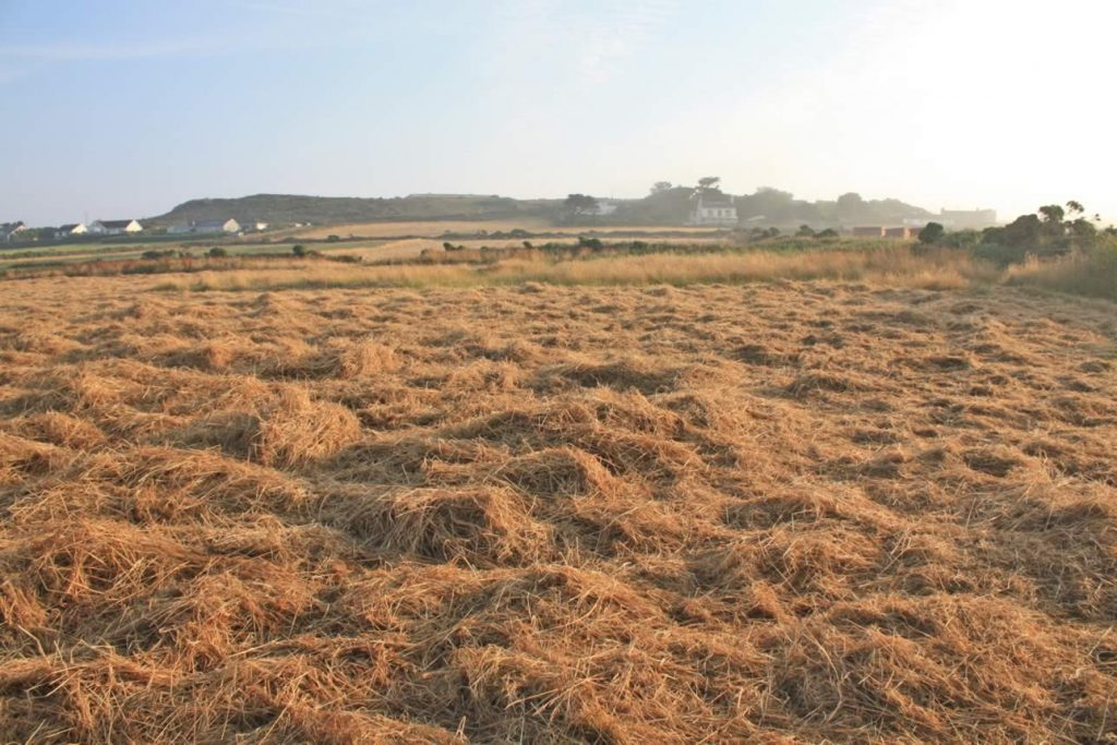 Hay in home field