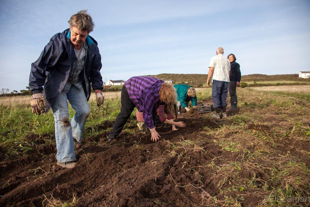 Team building day – potato harvesting                 Photo: Ellie Smart